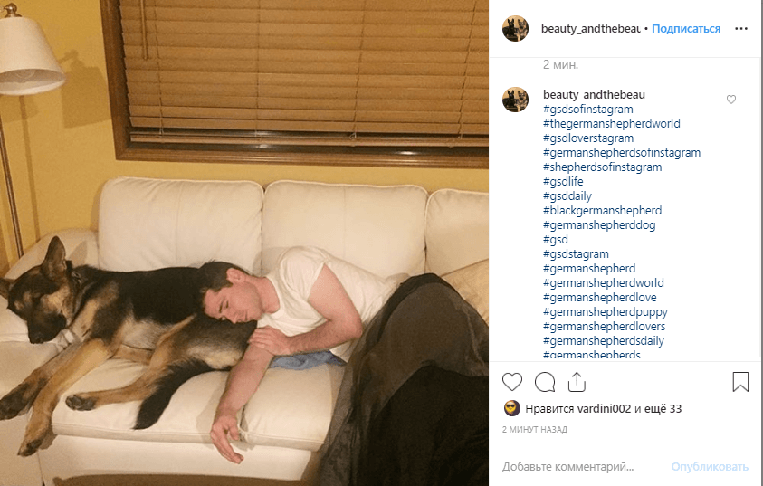 German shepherd sleeps with his man