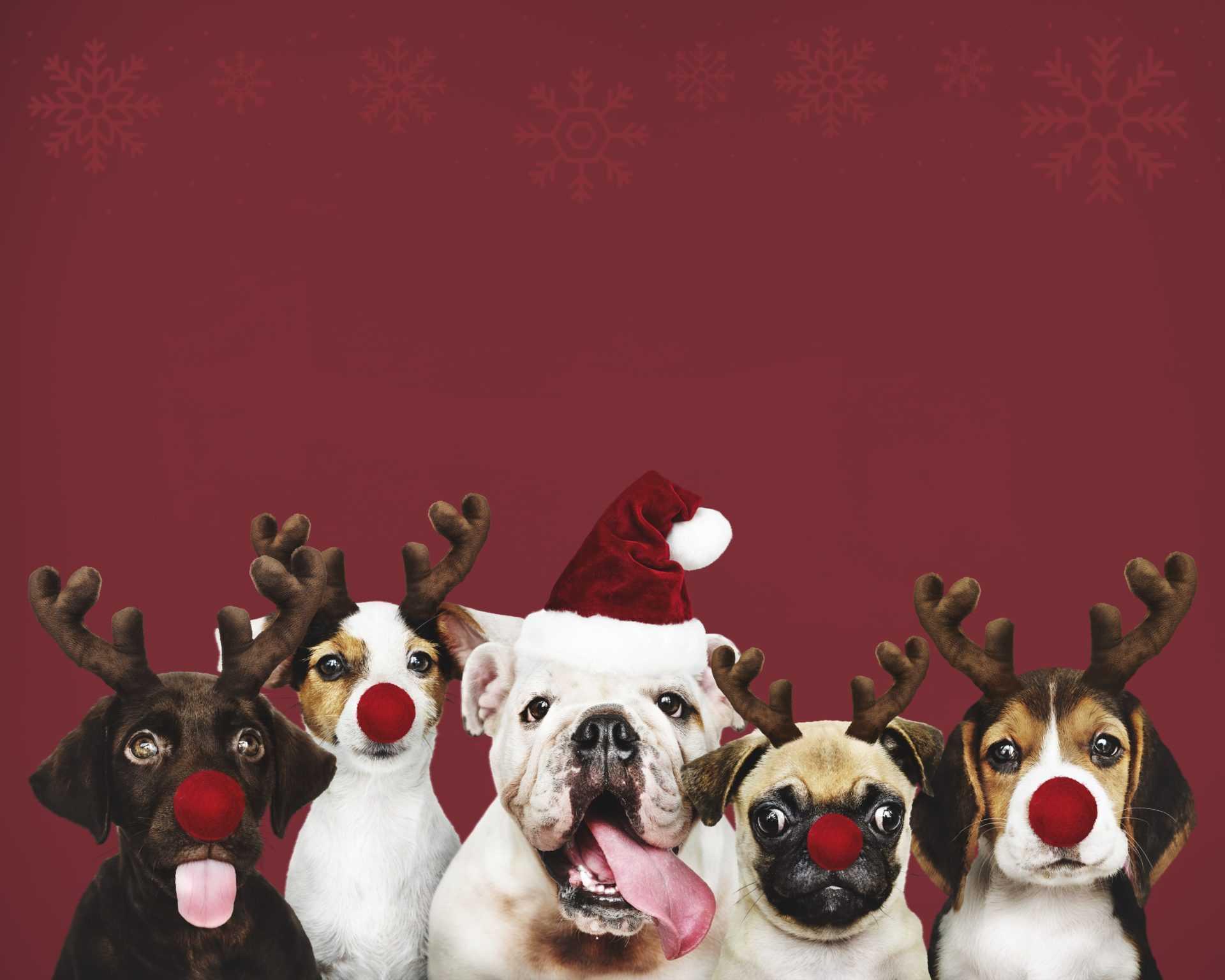 funny deer dogs